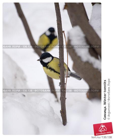 Синица. Winter tomtits, фото № 130138, снято 3 ноября 2006 г. (c) Argument / Фотобанк Лори