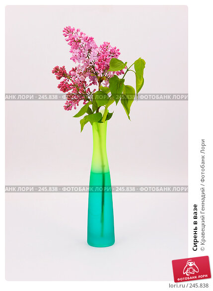 Сирень в вазе, фото № 245838, снято 8 мая 2005 г. (c) Кравецкий Геннадий / Фотобанк Лори