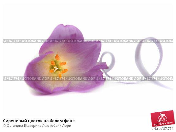 Купить «Сиреневый цветок на белом фоне», фото № 87774, снято 17 сентября 2007 г. (c) Останина Екатерина / Фотобанк Лори