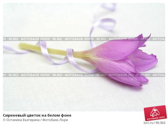 Купить «Сиреневый цветок на белом фоне», фото № 90902, снято 17 сентября 2007 г. (c) Останина Екатерина / Фотобанк Лори
