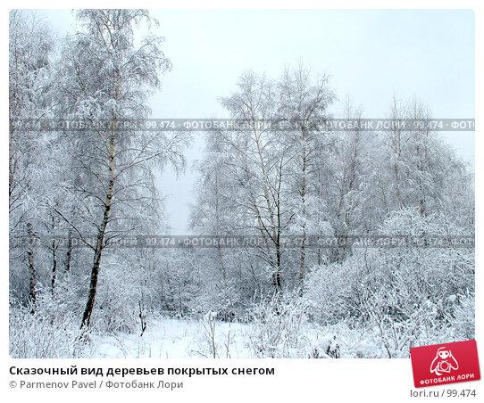 Купить «Сказочный вид деревьев покрытых снегом», фото № 99474, снято 15 февраля 2007 г. (c) Parmenov Pavel / Фотобанк Лори