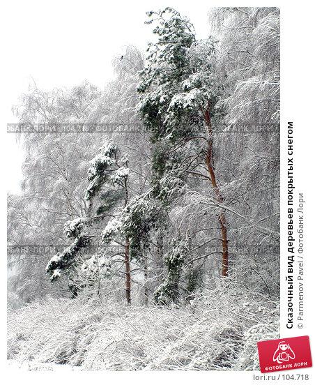 Сказочный вид деревьев покрытых снегом, фото № 104718, снято 21 июля 2017 г. (c) Parmenov Pavel / Фотобанк Лори