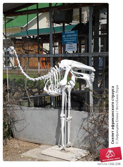 Скелет африканского страуса, фото № 242238, снято 27 марта 2008 г. (c) Лифанцева Елена / Фотобанк Лори