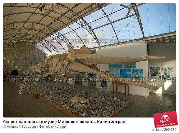 Скелет кашалота в музее Мирового океана. Калининград, фото № 299754, снято 22 сентября 2007 г. (c) Алексей Зарубин / Фотобанк Лори