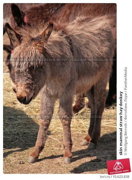 skin mammal straw hay donkey. Стоковое фото, фотограф Wolfgang Berroth / PantherMedia / Фотобанк Лори