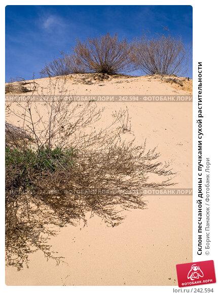 Склон песчаной дюны с пучками сухой растительности, фото № 242594, снято 29 марта 2008 г. (c) Борис Панасюк / Фотобанк Лори