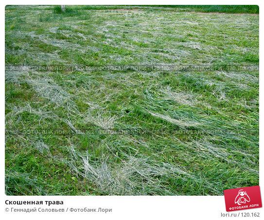 Купить «Скошенная трава», фото № 120162, снято 4 августа 2007 г. (c) Геннадий Соловьев / Фотобанк Лори