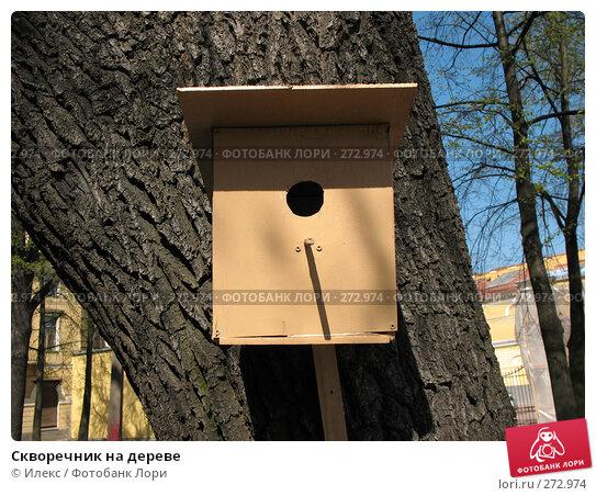 Скворечник на дереве, фото № 272974, снято 2 мая 2008 г. (c) Морковкин Терентий / Фотобанк Лори