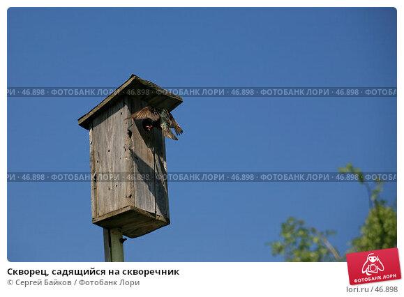Купить «Скворец, садящийся на скворечник», фото № 46898, снято 20 мая 2007 г. (c) Сергей Байков / Фотобанк Лори