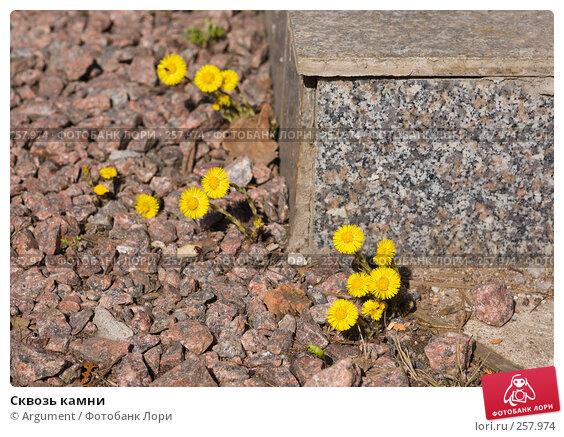 Сквозь камни, фото № 257974, снято 20 апреля 2008 г. (c) Argument / Фотобанк Лори