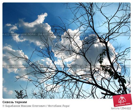 Сквозь тернии, фото № 254622, снято 29 августа 2007 г. (c) Барабанов Максим Олегович / Фотобанк Лори
