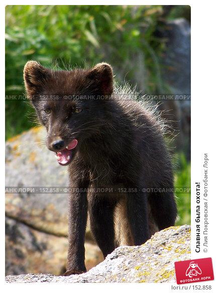 Славная была охота!, фото № 152858, снято 21 июля 2007 г. (c) Лия Покровская / Фотобанк Лори