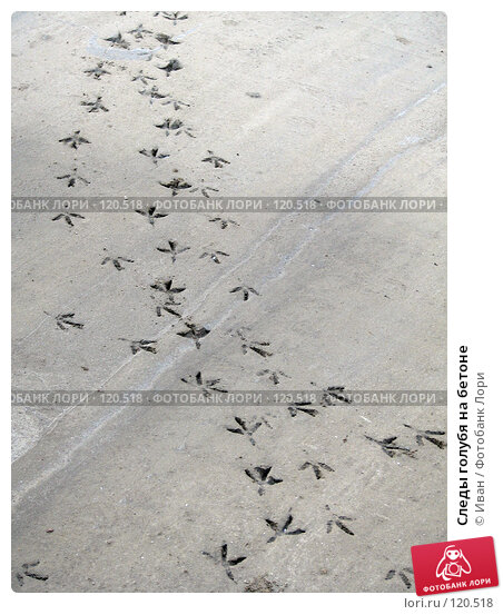 Следы голубя на бетоне, фото № 120518, снято 23 октября 2007 г. (c) Иван / Фотобанк Лори