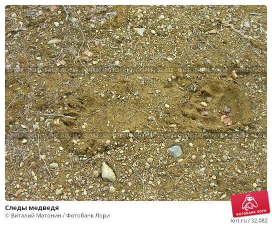 Следы медведя, фото № 32082, снято 3 июня 2006 г. (c) Виталий Матонин / Фотобанк Лори