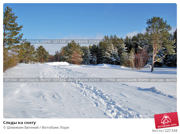 Следы на снегу, фото № 227534, снято 24 февраля 2008 г. (c) Шемякин Евгений / Фотобанк Лори
