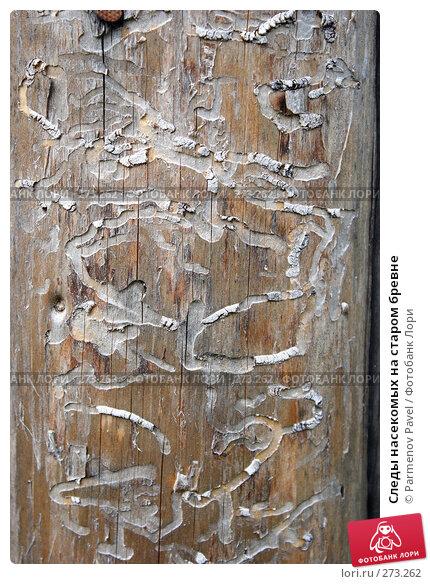 Следы насекомых на старом бревне, фото № 273262, снято 2 мая 2008 г. (c) Parmenov Pavel / Фотобанк Лори