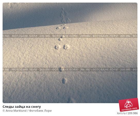 Следы зайца на снегу, фото № 209986, снято 17 февраля 2008 г. (c) Anna Marklund / Фотобанк Лори