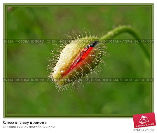 Слеза в глазу дракона, эксклюзивное фото № 26134, снято 7 мая 2006 г. (c) Юлия Ухина / Фотобанк Лори