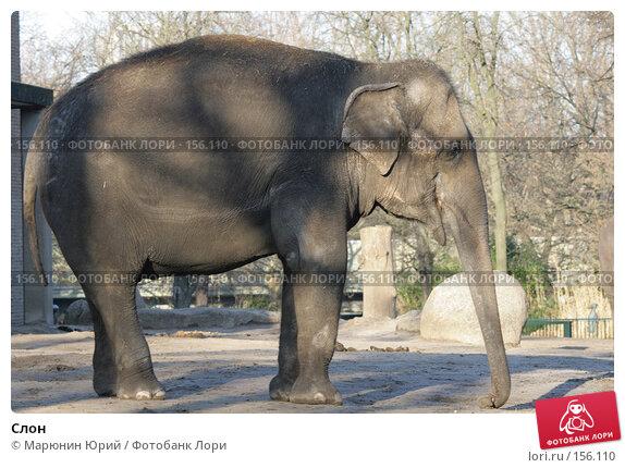 Купить «Слон», фото № 156110, снято 10 декабря 2007 г. (c) Марюнин Юрий / Фотобанк Лори