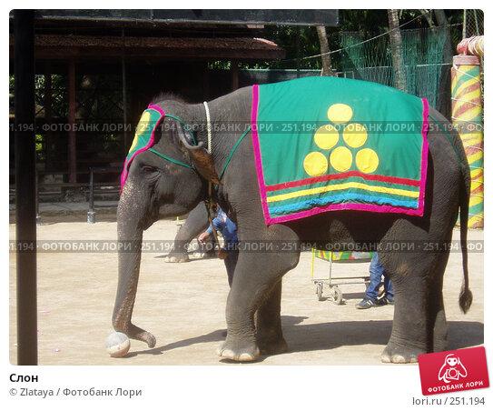 Слон, фото № 251194, снято 28 октября 2016 г. (c) Zlataya / Фотобанк Лори