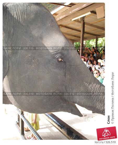 Купить «Слон», фото № 326510, снято 13 августа 2007 г. (c) Примак Полина / Фотобанк Лори