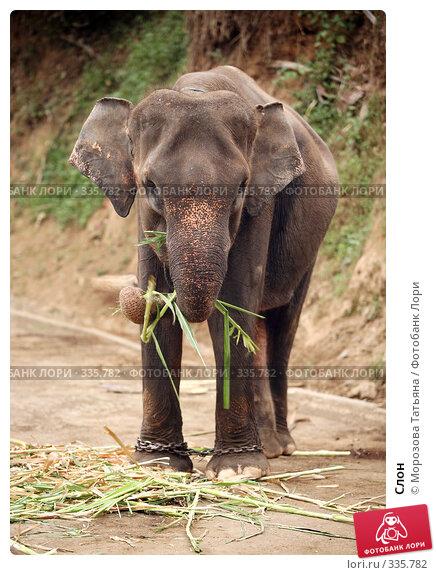 Слон, фото № 335782, снято 30 октября 2007 г. (c) Морозова Татьяна / Фотобанк Лори