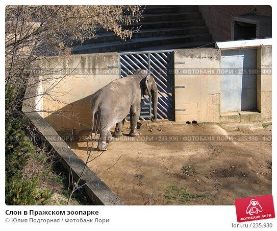 Слон в Пражском зоопарке, фото № 235930, снято 15 марта 2008 г. (c) Юлия Селезнева / Фотобанк Лори