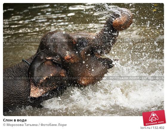 Слон в воде, фото № 132402, снято 30 октября 2007 г. (c) Морозова Татьяна / Фотобанк Лори