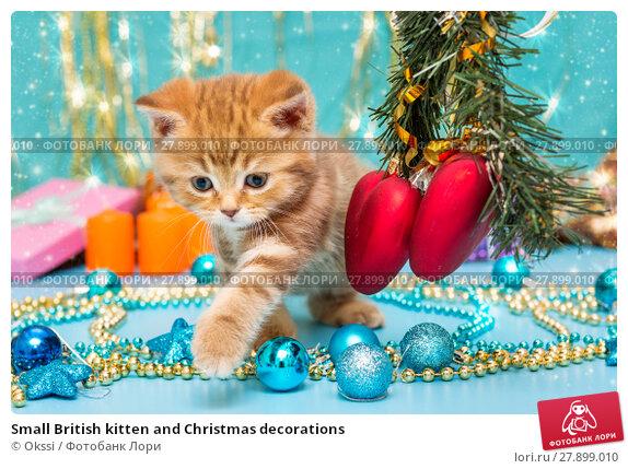 Купить «Small British kitten and Christmas decorations», фото № 27899010, снято 30 ноября 2017 г. (c) Okssi / Фотобанк Лори