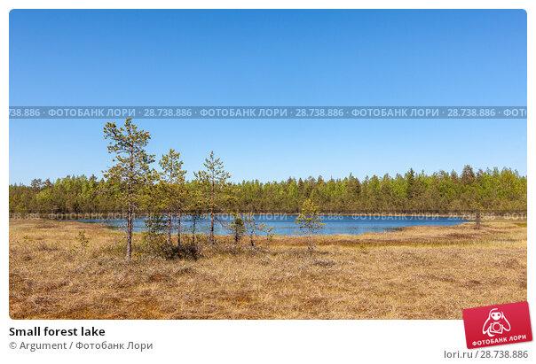 Купить «Small forest lake», фото № 28738886, снято 30 мая 2009 г. (c) Argument / Фотобанк Лори