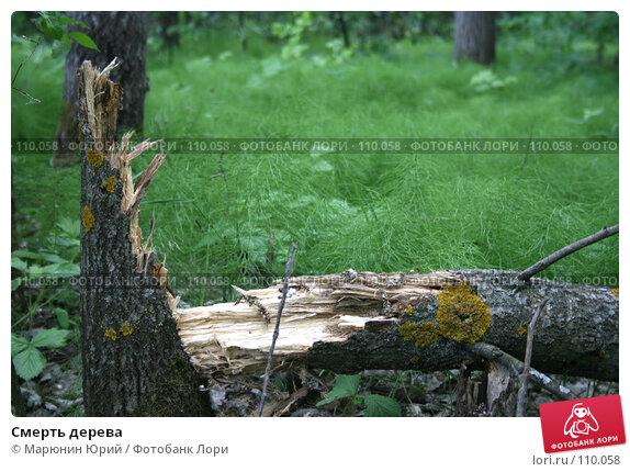 Смерть дерева, фото № 110058, снято 12 июня 2007 г. (c) Марюнин Юрий / Фотобанк Лори