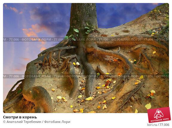 Смотри в корень, фото № 77006, снято 21 июля 2007 г. (c) Анатолий Теребенин / Фотобанк Лори