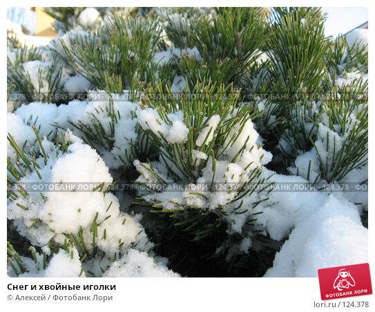 Снег и хвойные иголки, фото № 124378, снято 17 ноября 2007 г. (c) Алексей / Фотобанк Лори