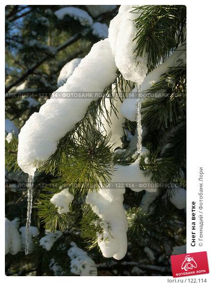 Купить «Снег на ветке», фото № 122114, снято 18 ноября 2007 г. (c) Геннадий / Фотобанк Лори