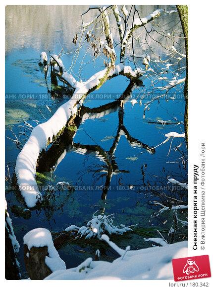 Снежная коряга на пруду, фото № 180342, снято 17 августа 2017 г. (c) Виктория Щепкина / Фотобанк Лори