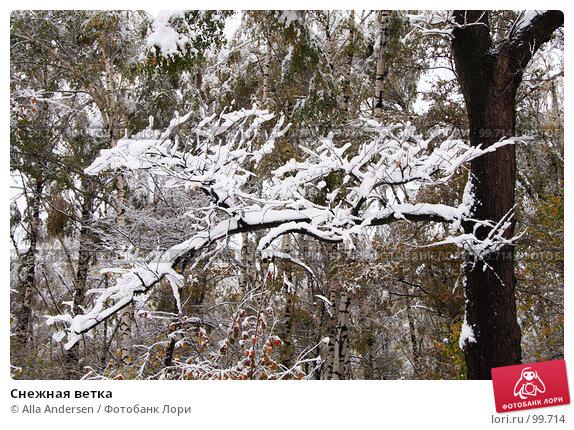 Снежная ветка, фото № 99714, снято 16 октября 2007 г. (c) Alla Andersen / Фотобанк Лори