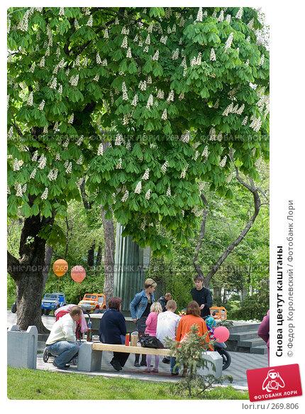 Снова цветут каштаны, фото № 269806, снято 1 мая 2008 г. (c) Федор Королевский / Фотобанк Лори
