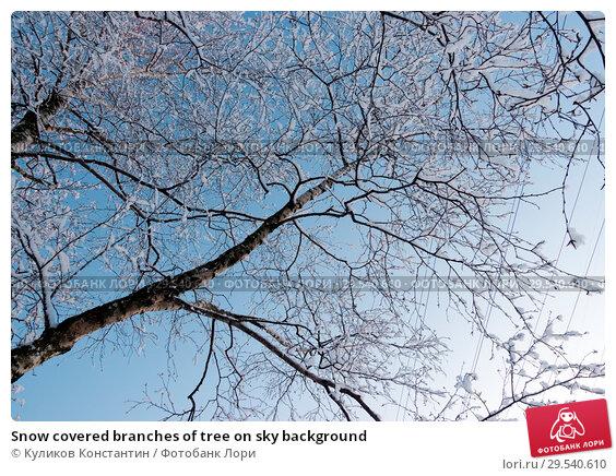 Купить «Snow covered branches of tree on sky background», фото № 29540610, снято 21 февраля 2018 г. (c) Куликов Константин / Фотобанк Лори