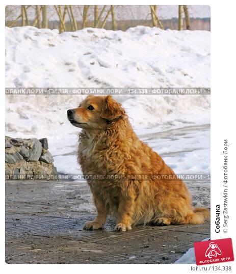 Собачка, фото № 134338, снято 20 марта 2005 г. (c) Serg Zastavkin / Фотобанк Лори