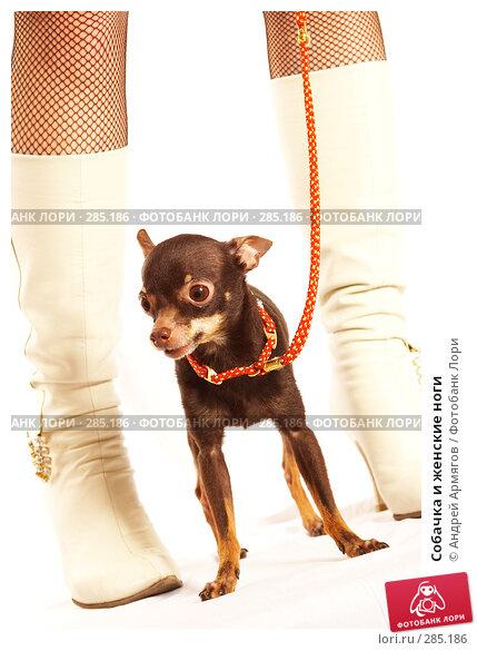 Купить «Собачка и женские ноги», фото № 285186, снято 5 апреля 2007 г. (c) Андрей Армягов / Фотобанк Лори