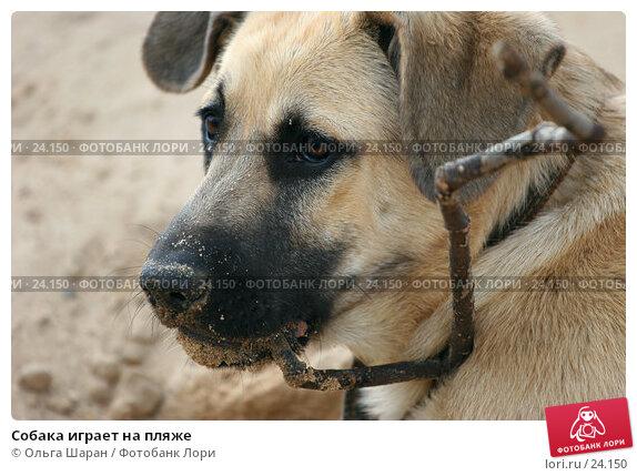 Собака играет на пляже, фото № 24150, снято 13 июня 2006 г. (c) Ольга Шаран / Фотобанк Лори