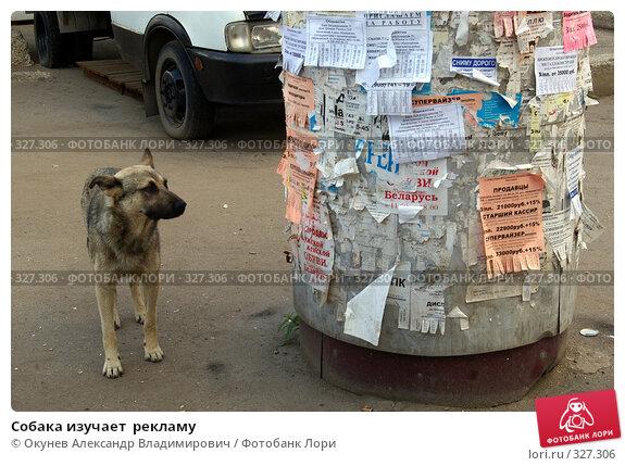 Купить «Собака изучает  рекламу», фото № 327306, снято 18 июня 2008 г. (c) Окунев Александр Владимирович / Фотобанк Лори