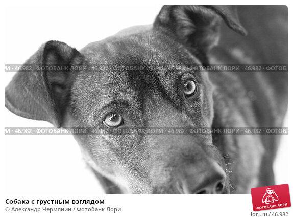 Собака с грустным взглядом, фото № 46982, снято 24 февраля 2007 г. (c) Александр Чермянин / Фотобанк Лори