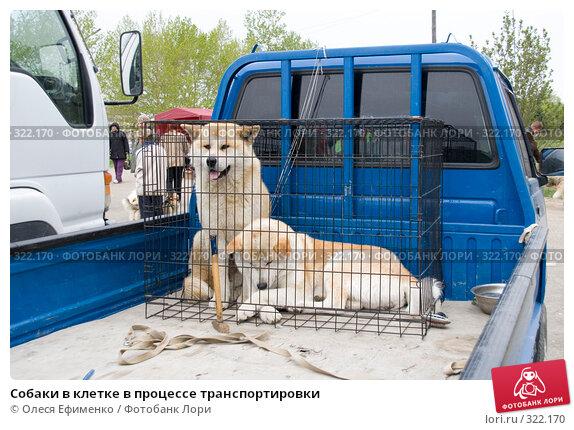 Собаки в клетке в процессе транспортировки, фото № 322170, снято 25 мая 2008 г. (c) Олеся Ефименко / Фотобанк Лори