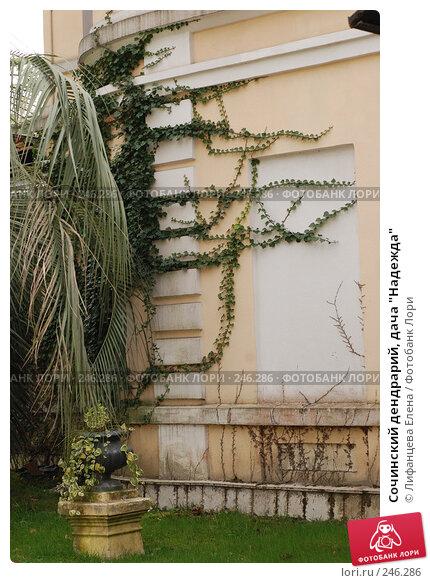 """Сочинский дендрарий, дача """"Надежда"""", фото № 246286, снято 24 марта 2008 г. (c) Лифанцева Елена / Фотобанк Лори"""