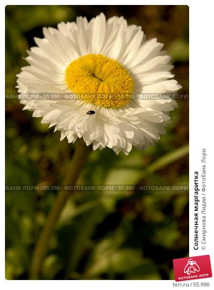 Солнечная маргаритка, фото № 55990, снято 4 июня 2007 г. (c) Смирнова Лидия / Фотобанк Лори