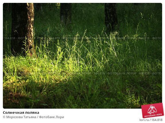 Солнечная поляна, фото № 164818, снято 17 июня 2007 г. (c) Морозова Татьяна / Фотобанк Лори