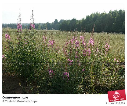 Солнечное поле, фото № 226358, снято 12 августа 2006 г. (c) VPutnik / Фотобанк Лори