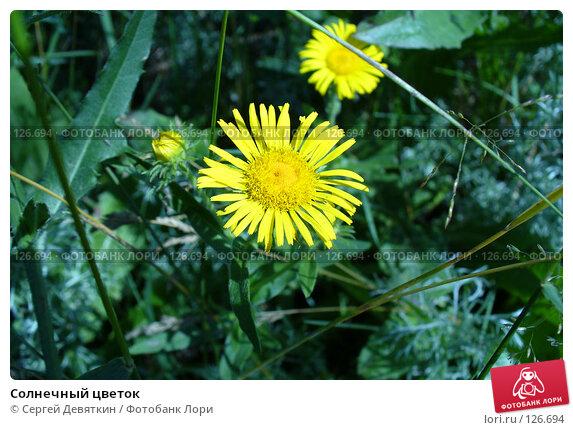 Солнечный цветок, фото № 126694, снято 8 июля 2007 г. (c) Сергей Девяткин / Фотобанк Лори