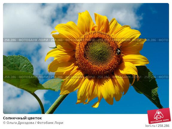 Солнечный цветок, фото № 258286, снято 3 августа 2005 г. (c) Ольга Дроздова / Фотобанк Лори